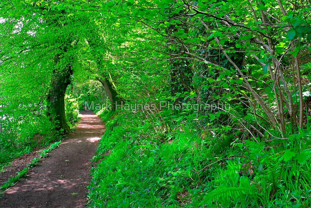 Natures Way by Mark Haynes Photography