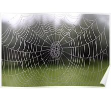 Morning dew on spider's web Poster