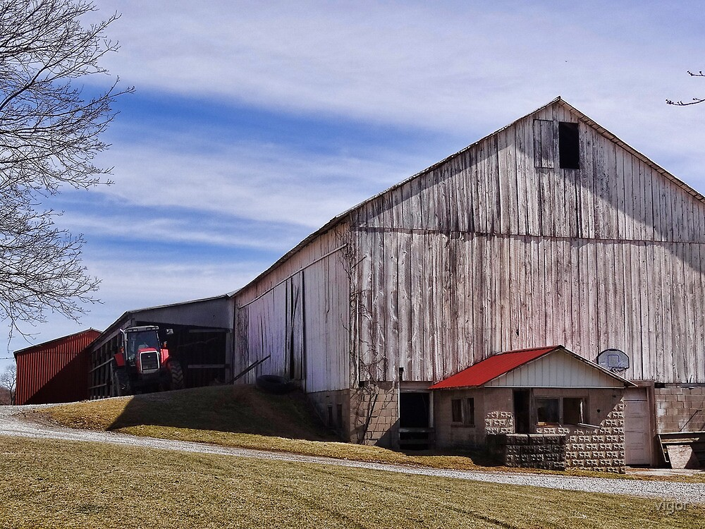 Barns are in the Country by vigor
