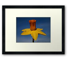 Sun worshipper Framed Print