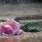 Rose in the rain by hpelly31