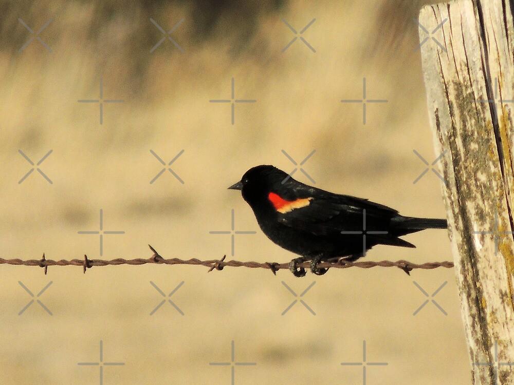 Red Wing Blackbird by BettyEDuncan