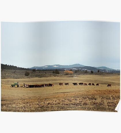 Cattle Country - Meals on Wheels Poster