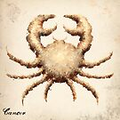 The Crab by Downsea