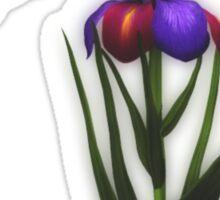 Hummingbird And Iris Flower  Sticker