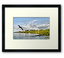 Pelican Coming Home Framed Print