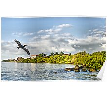 Pelican Coming Home Poster