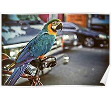 East Village Parrot Poster