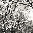 Snow in Tompkins Park by jazzwall