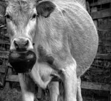Pretty cow with a huge bell, staring, in bW Sticker