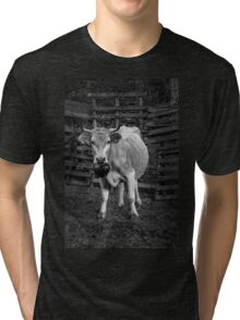 Pretty cow with a huge bell, staring, in bW Tri-blend T-Shirt