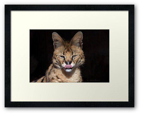 A special Cat..The Serval by John44
