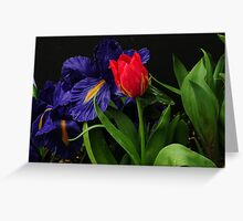 FIRST RED TULIP~ Greeting Card