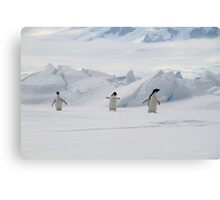 Penguin Parade Canvas Print
