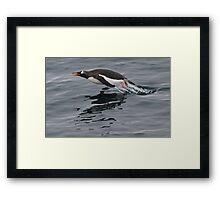 Flying Penguin Framed Print