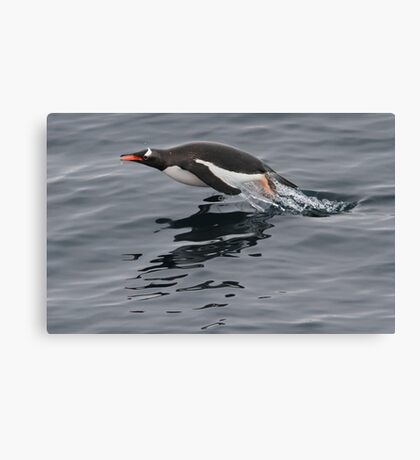 Flying Penguin Canvas Print