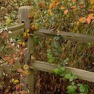 Wooden Fence by Lee LaFontaine