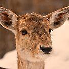 oh deer! by Sylvain Dumas