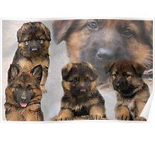 German Shepherd Puppy Collage Poster