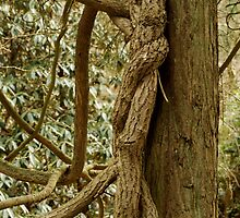 Twisted Naughty Tree  by Heather Eeles