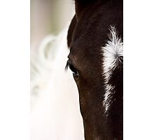 Horse mare Saskatchewan Field Photographic Print
