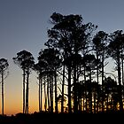 Sunset Trees by jcmeyer
