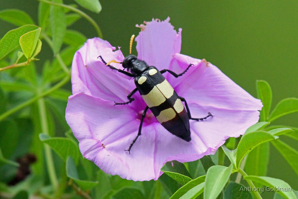 The insect and the flower by jozi1