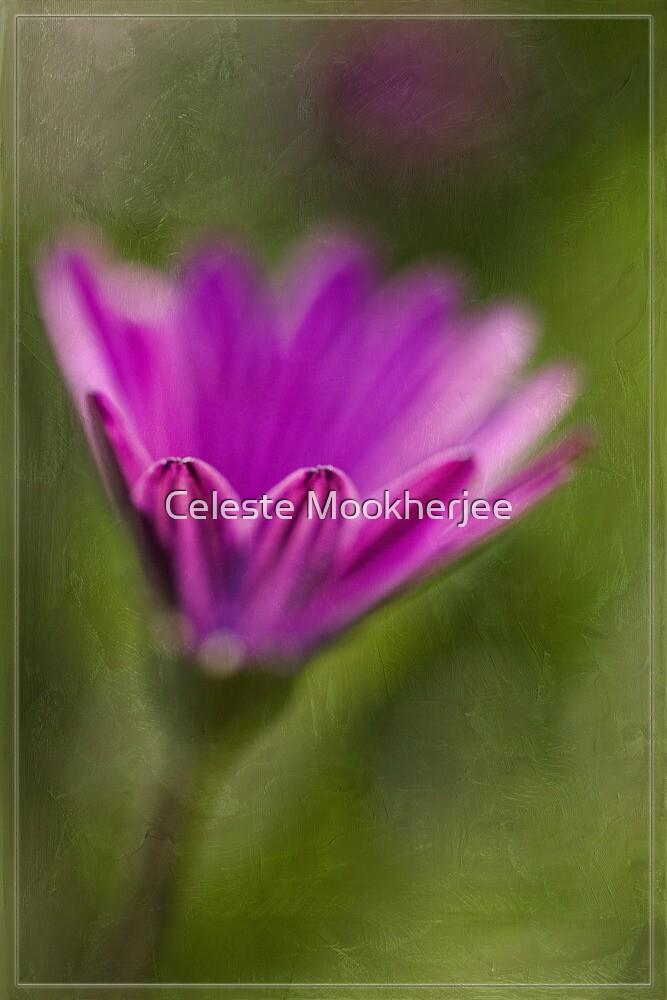A simple daisy by Celeste Mookherjee