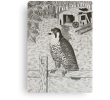 Peregrine Falcon On Fence Canvas Print
