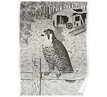 Peregrine Falcon On Fence Poster