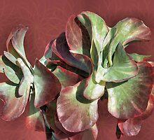Aloe Design by Rosalie Scanlon