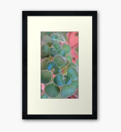 Soft Smart Shoot Framed Print