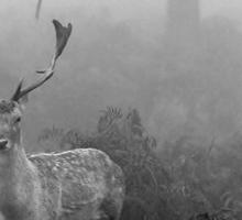 Deer in Nature Sticker