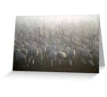 large flock of Common crane Greeting Card