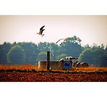 """Autumn Drought"" Photographic Print"
