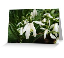 SNOWDROPS ART/ CARDS/ PHONE CASE Greeting Card