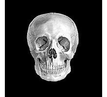 Albinus Skull 01 - Back To The Basic - Black Background Photographic Print