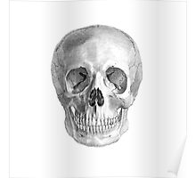 Albinus Skull 01 - Back To The Basic - White Background Poster