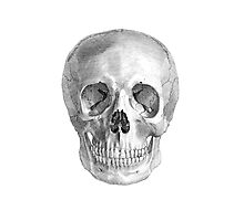 Albinus Skull 01 - Back To The Basic - White Background Photographic Print