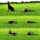 Sometimes A Dog Just Needs a Back Rub by aprilann