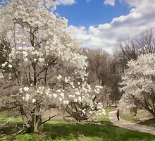 Magnolia Walk by Marilyn Cornwell