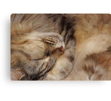 Maine Coon Sleeping Canvas Print