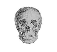 Albinus Skull 04 - Never Seen Before Genius Diamonds  - White Background Photographic Print
