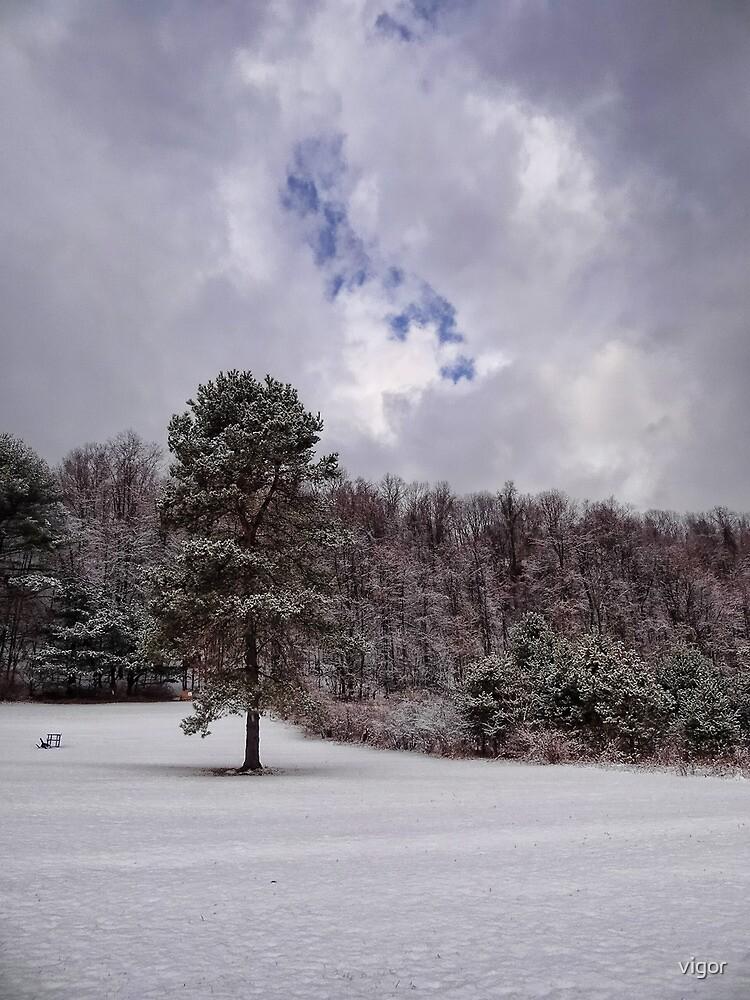 Winter wonderland by vigor