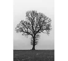 Tree & Mist Photographic Print
