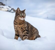 Cat at Sun Rise by Christophe Besson