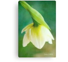Demure Daffodil Canvas Print