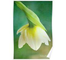 Demure Daffodil Poster