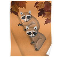 Fall Raccoons On Tree Poster