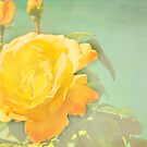 Vintage Yellow Rose by Ana  Eugénio